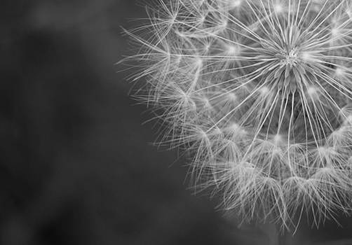 Wishing Dandelion Flower by Lisza Anne McKee