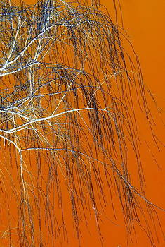 Rosanne Jordan - Wisps of a Willow