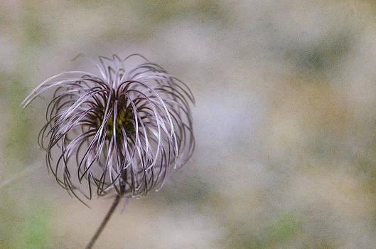 Martina Fagan - Wispy flower