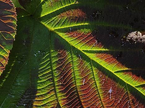 Witchhobble Leaf Detail by Bob Grabowski