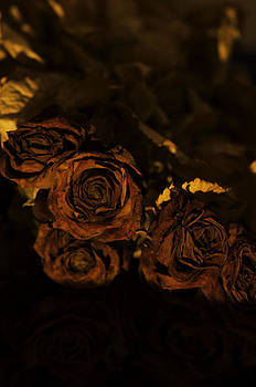 Henrik Petersen - Withered roses
