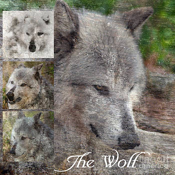 Wolf Collage by Eva Thomas