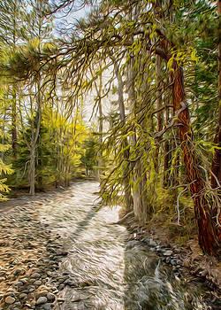 Omaste Witkowski - Wolf Creek Afternoon Light