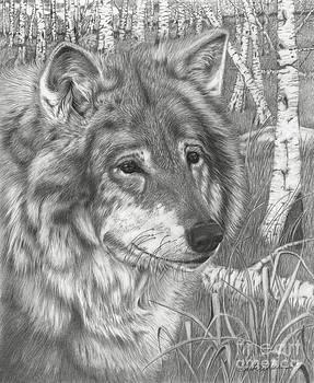 Wolf Gaze by Barb Schacher