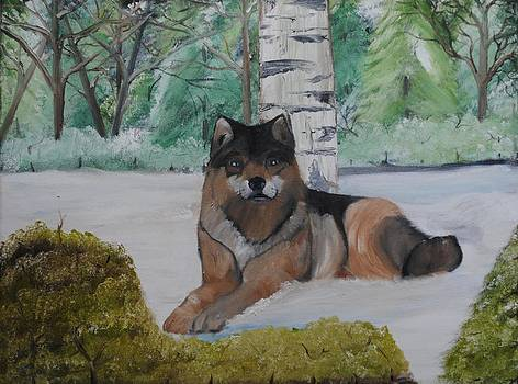 Wolf in front of Birch Tree by Donald Schrier