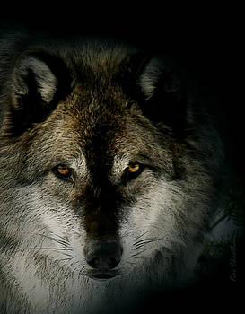 Kae Cheatham - Wolf in Shadow