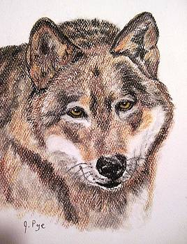 Wolf by Joan Pye
