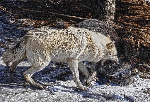 Wolf Justice by Skye Ryan-Evans