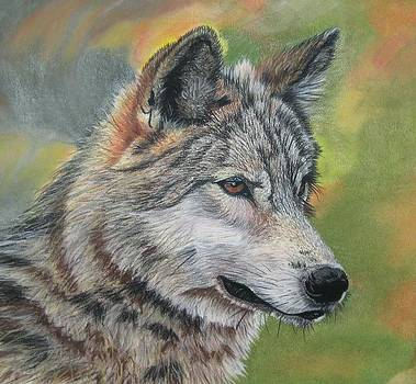 Wolf by Linda Eversole