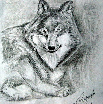 Wolf N Rabbit by Ram Prasad