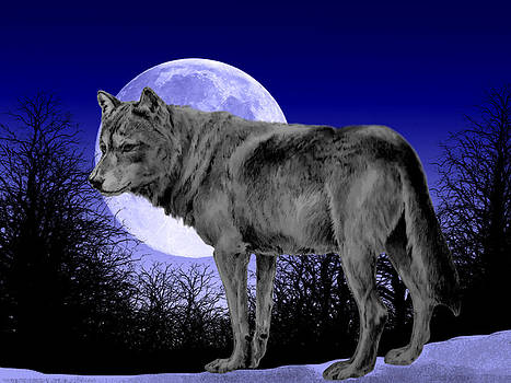 Wolf Observation by Moonlight. by Cynthia Adams