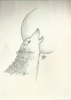 Wolf Sketch by Saleem Baig