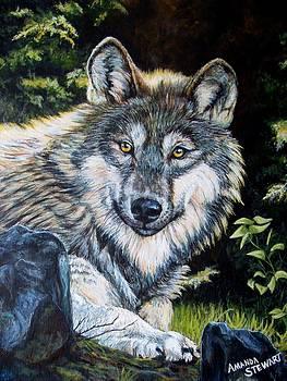 Wolf Study by Amanda Hukill