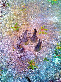 Wolf Track by Emmett Mavy