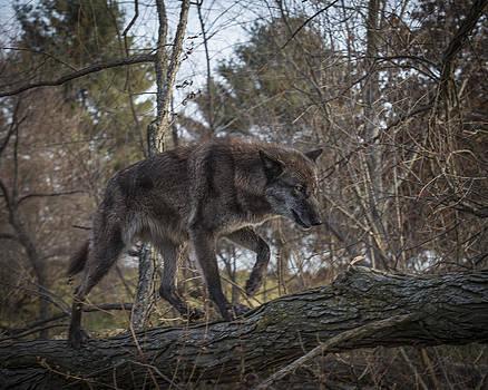 Jack R Perry - Wolf Walk