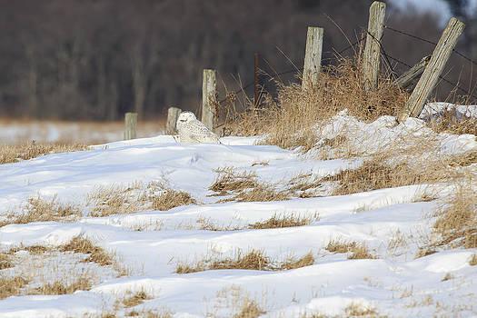 Gary Hall - Wolfe Island Snowy