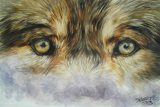 Wolf's Gaze And Fog by Kristina Delossantos