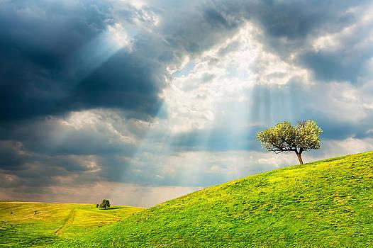 Wonder Land by Evgeni Dinev