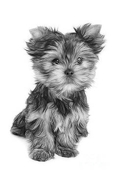 Wonderful puppy by Konstantin Gushcha