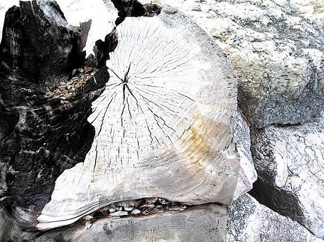 Marcello Cicchini - Wood 2