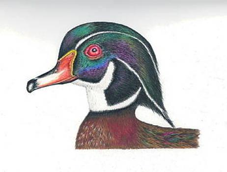 Wood Duck by Elizabeth H Tudor