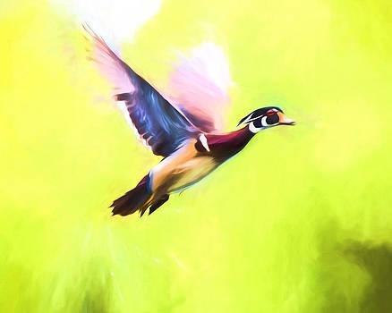 Priya Ghose - Wood Duck In Flight Art