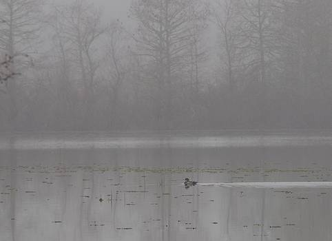 Billy  Griffis Jr - Wood Duck in Fog