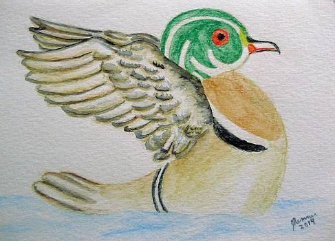 Wood Duck by Joann Renner