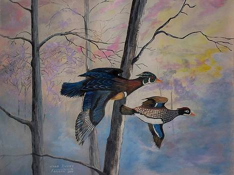 Wood Ducks by Dave Farrow