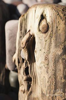 Anne Gilbert - Wood Face