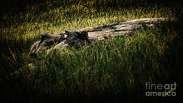 Charles Davis - Wood in Grass