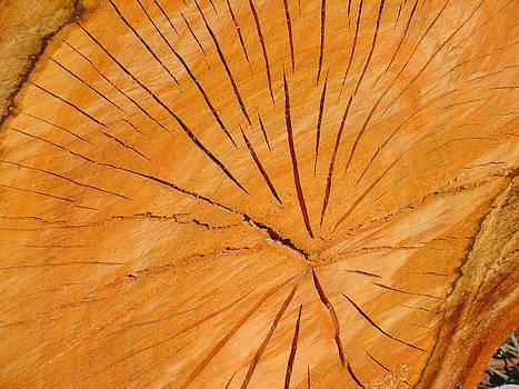 Wood Log by Jonathan Androwski