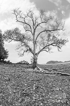 Wood  by Phumiphat Thammawong
