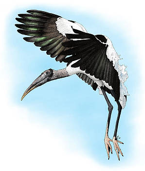 Wood Stork by Roger Hall