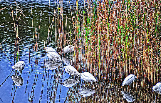 Wood Storks Reflecting by Marilyn Holkham