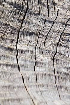 Hermanus A Alberts - Wood Texture