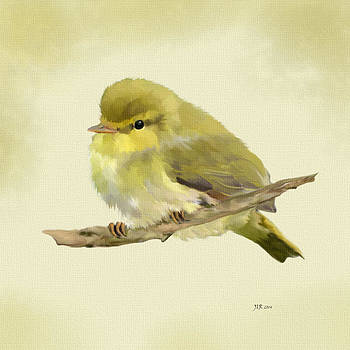 Wood Warbler - Phylloscopus Sibilatrix by Bamalam  Photography