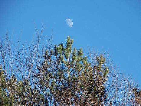 Wooded Moonrise by Kevin Croitz