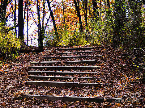 Wooded Stairs by Catherine Hill