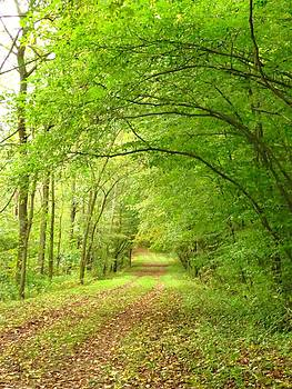 Woodland Arches by Lori Frisch