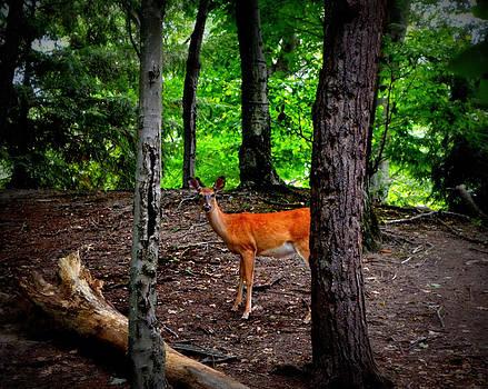 Michelle Calkins - Woodland Deer