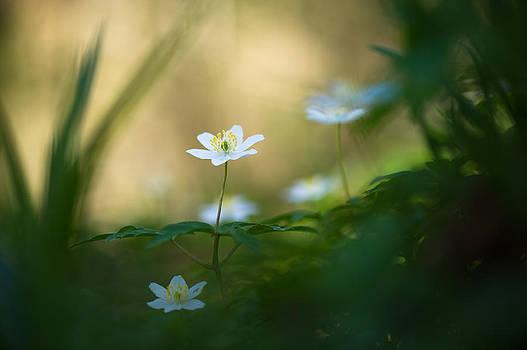 Woodland Deities by Sarah-fiona  Helme