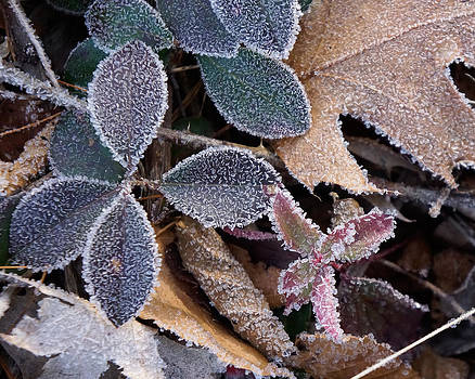 Woodland frost by Dawn Hagar