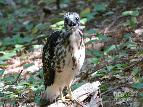 Woodland Juvenile by Glass Slipper
