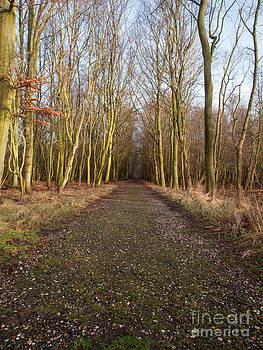 Woodland Path in Winter by David Hanlon