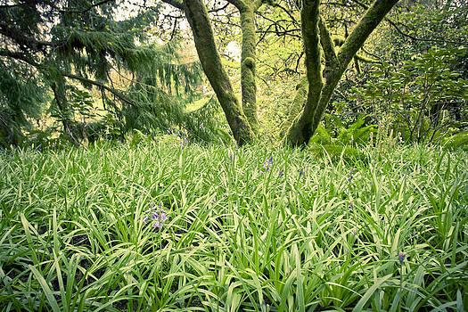 Priya Ghose - Woodland Spring