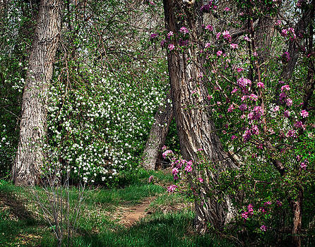Woodland Spring with Cherry Blossoms by Julie Magers Soulen