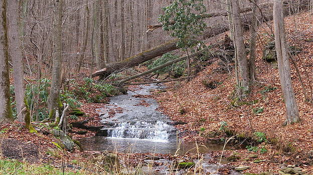 Woodland stream by Diane Mitchell