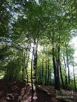 Woodland Sun by Heather Gordon