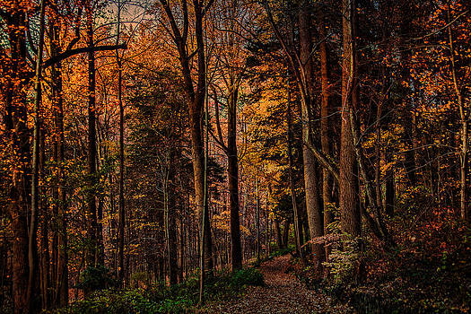 Chris Lord - Woodland Trail In Autumn